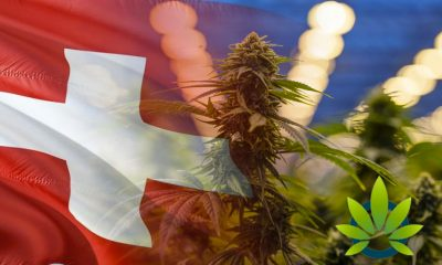 Medical Cannabis Demand Sparks in All Time High in Interest in Switzerland