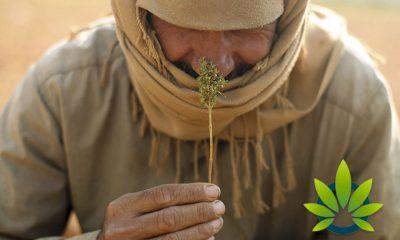 Examining the Medical Marijuana and CBD Oil Use in Muslim Culture
