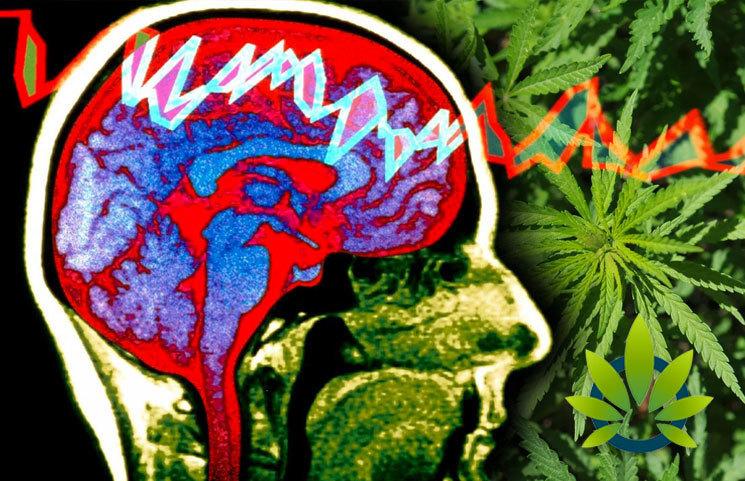 Epilepsy & Behavior Study: Those with Chronic Illnesses, CBD helps to improve Quality of Life