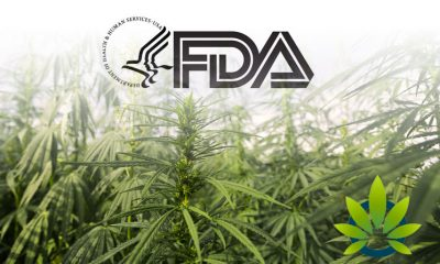 FDA Still Unsettled About CBD, Cites Dosing Amounts and Medical Interactions as Biggest Questions