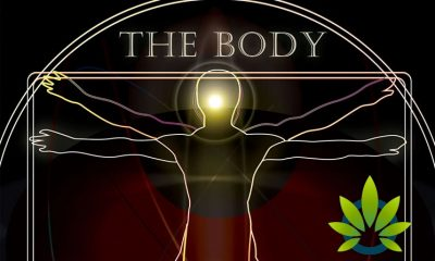 Find CBD Sports and Beauty Products at The Body Conference Show