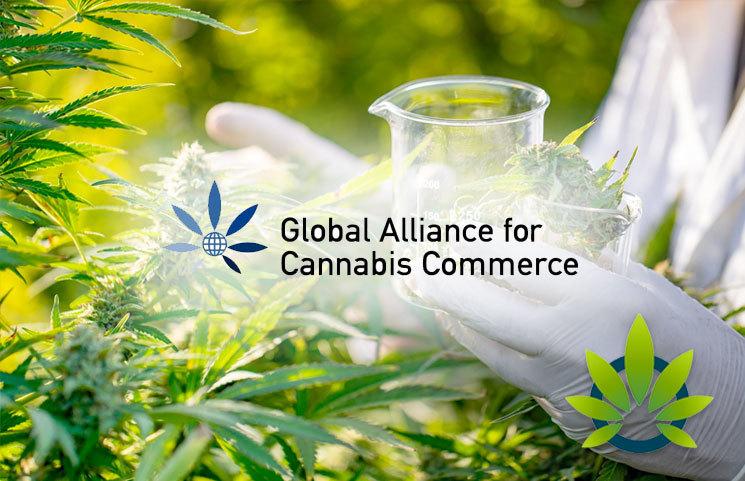 Global Alliance for Cannabis Commerce (GACC) Publishes Groundbreaking US Model Legislation