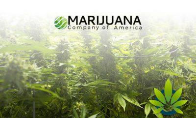Marijuana Company of America's hempSMART CBD Product Line to Launch in Scotland