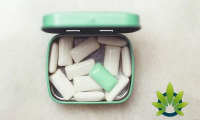 Cannabis Chewing Gum Benefits: Can It Provide Chronic Pain and Inflammation Relief?