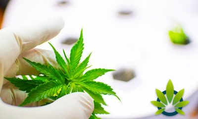 Medical Marijuana Research Programs Tapping into Medical Schools in Philadelphia