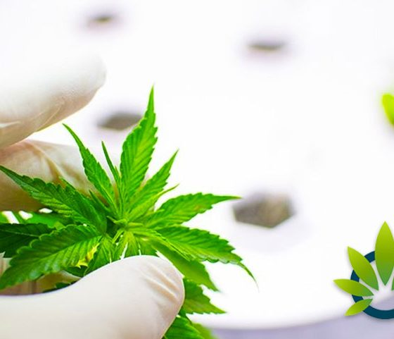 Medical Marijuana Research Programs Tapping into Medical Schools in Philadelphia