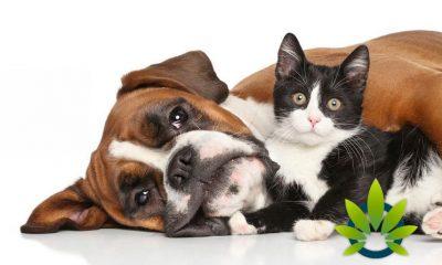 Revolution Enterprises Unveils Hemp-Derived CBD Pet Wellness Products with HempVet Acquisition