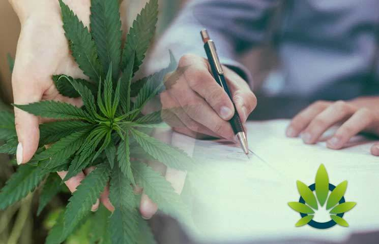 Senators Pen a Letter to DoJ and Homeland Security Looking to Stop the Anti-Marijuana Immigration Policy