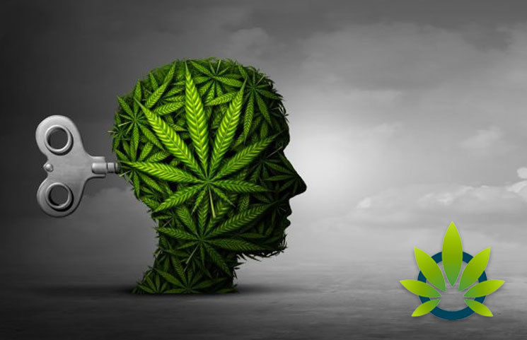 Elsevier Study Links Cannabis Addiction to the Brain Reward System