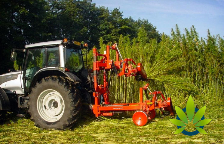 Tennessee's New Hemp Program Rules Include Relaxed Restrictions and Farmers Benefits