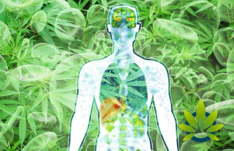 cb2 endocannabinoid system