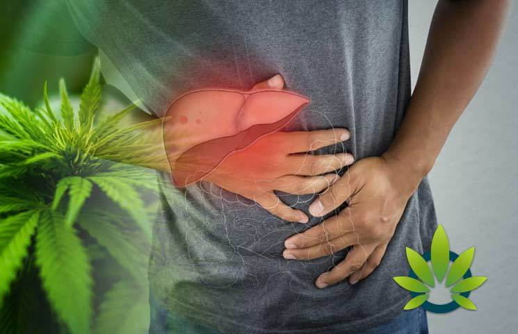New ValidCare Study Set to Examine CBD's Effects on Safe Liver Function