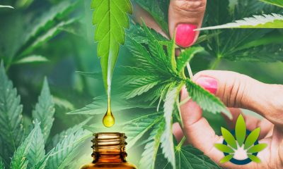 [VIDEO] 5 Quick Facts About CBD Every Cannabidiol User Should Know