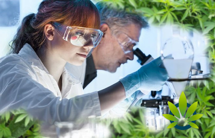Unregulated CBD Market Gives Great Importance to Reading a Product Certification of Analysis