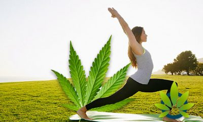 Yoga and Medical Marijuana: Can Herbal Cannabis Help the Practice of Stretching?
