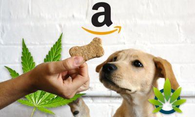 cbd pet products on amazon