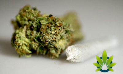 State of Illinois Legalizes Cannabis for Recreational Use, Leaving Naperville Officials Concerned