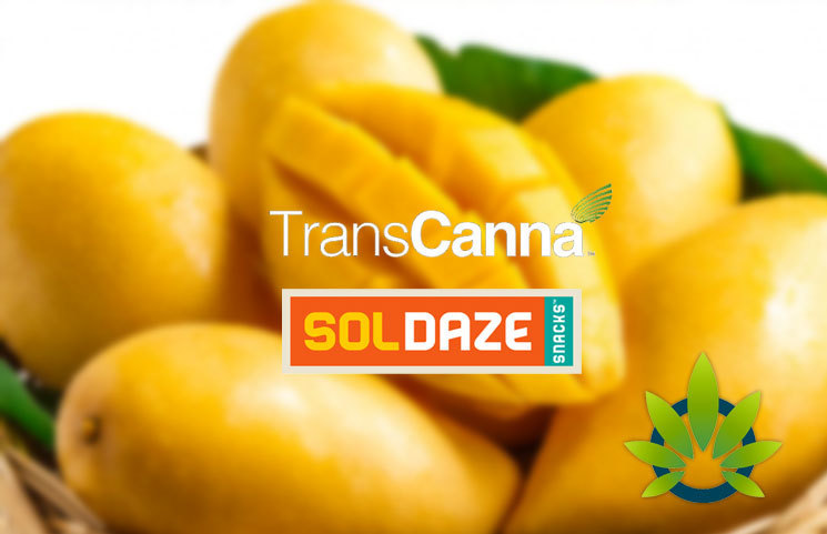 SolDaze, TransCanna Partner for a New Cannabidiol Snack Line of CBD-infused Mango Bites