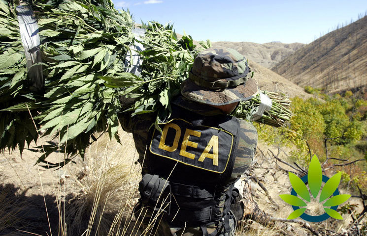 Nearly 3 Million Cannabis Plants Seized by DEA in 2018, a Significant Drop Since 2017
