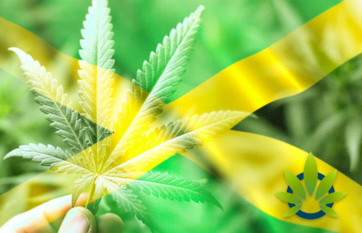 Aphria's Marigold Projects to Open its First Cannabis Shop in Kingston, Jamaica This August