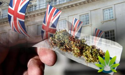 Approximately Half of All UK Adults Now Support Marijuana Legalization Per YouGov Survey