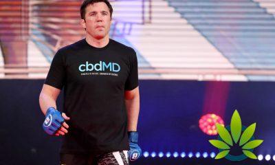 Bellator MMA Signs A Multi-Year Deal With CBD Cannabis Company cbdMD