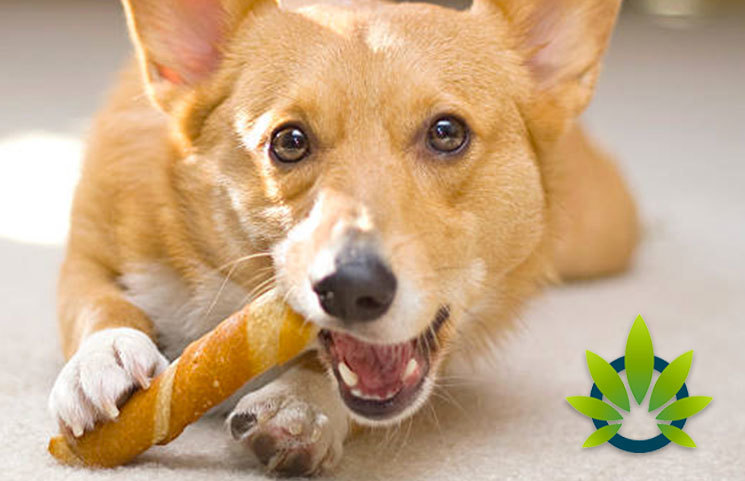 Best CBD Dog Treats for 2019: How to Find the Top Cannabidiol-Infused Edibles for Dogs