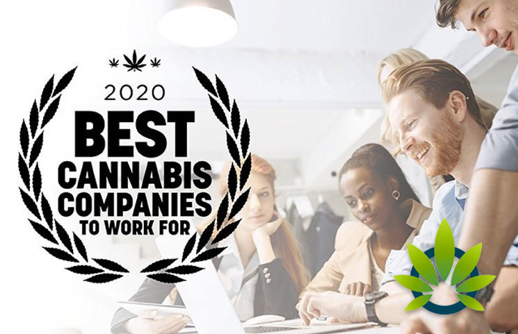 2020 Best Companies To Work For Best Cannabis Companies To Work For 2020 Survey Launches by
