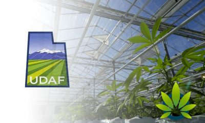 Big Delay on Medical Cultivation Licenses in Utah from Department of Agriculture and Food
