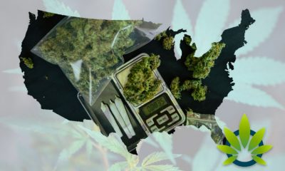 Bank of America Analyst: By 2024, 13 States Expect to Sell $1 Billion of Cannabis