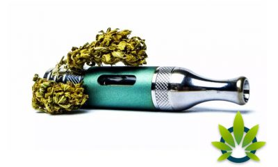 Vaping CBD Buds Can Be Used Twice