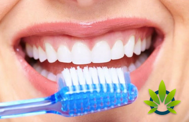 Uptick in Hemp CBD-Based Wellness Solutions for Healthy Oral Hygiene Continues