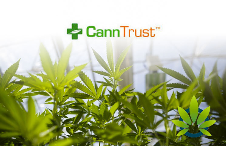 CannTrust-CTST-Stock-Drops-Over-20-Due-to-Health-Canada-Audits-Non-Licensed-Production