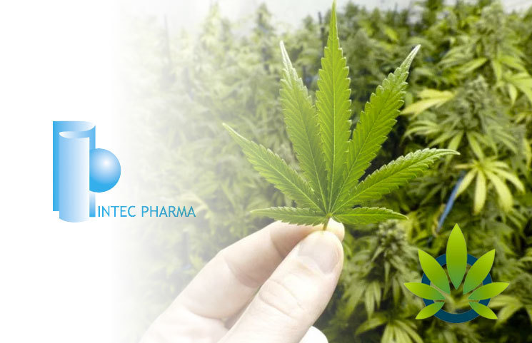 Cannabis Firm Intec Pharma's Stock Plummets Over 80% After Unsuccessful Drug Clinical Trial