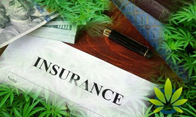 Cannabis Insurance FAQ: Top Questions to Ask a Prospective Insurance Broker