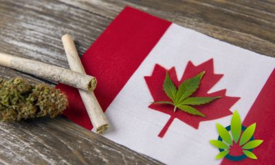Health Canada's Cannabis Research Process Has Only Approved Nearly 1 in 10 Applications So Far