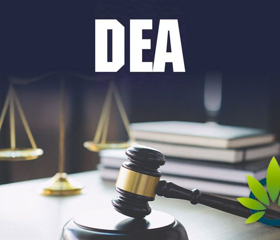 DEA Still Working on Marijuana Growing Applications as Senators Request Status Updates