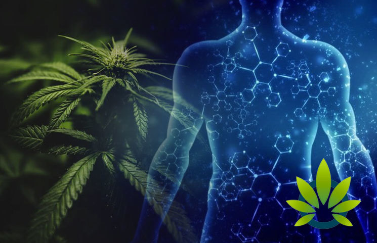 Cannabinoid Receptors: Everything to Know About CB Receptors and Endocannabinoid System