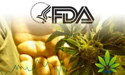 FDA Expedites CBD Regulations, Leading to Major Boost in Cannabis Stocks