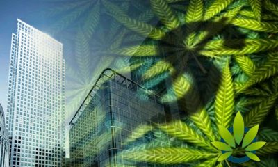 Five Ways Cannabis Firms Can Put an End to Counterfeiting Intellectual Property Rights