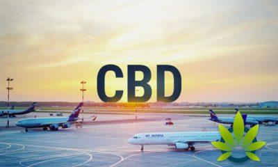 Top CBD Oil Flying Tips