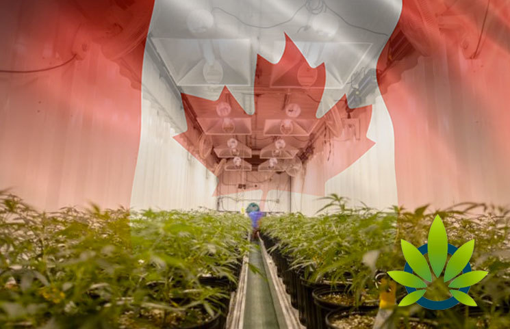 Statistics Canada Says Country's Hemp Production is Expected to Double This Year