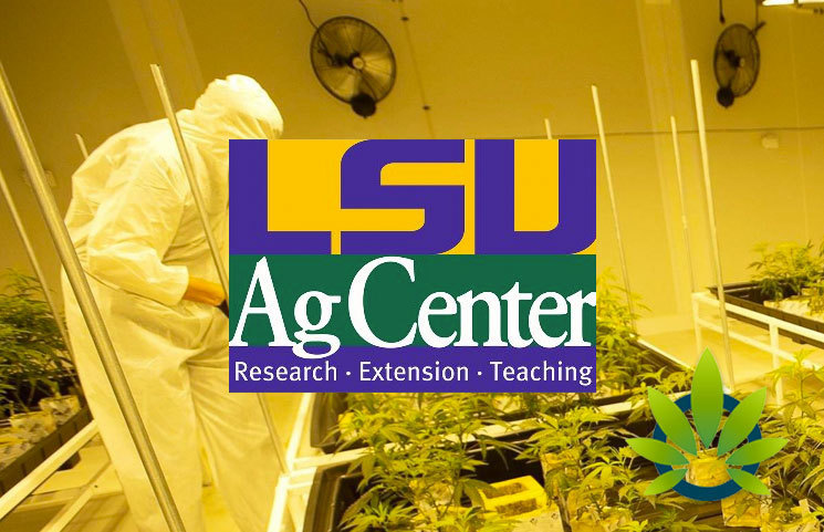 LSU AgCenter Medical Marijuana Program Results Upcoming for New CBD and THC Product Release