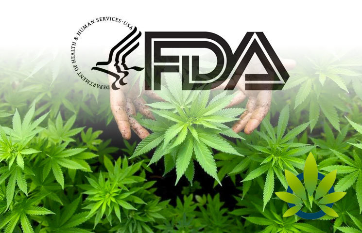 Legalization Confusion, Barrier to Entry in the US CBD Market Rises Amidst FDA's Lack of Regulatory Pathway