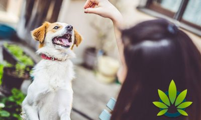Over One Hundred Pet Owners Report to FDA How CBD Helps Their Pets Health