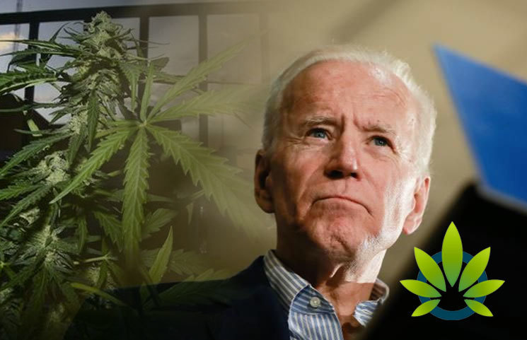 Examining Democratic Presidential Candidate Joe Biden and His Medical Marijuana Position