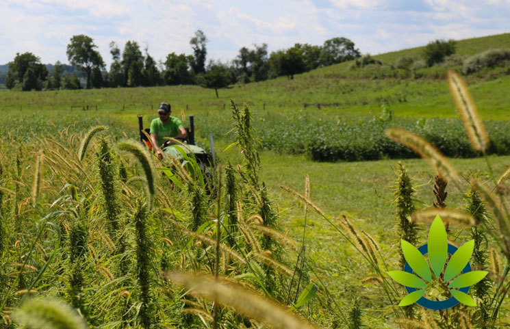 Regenerative Hemp Farming Research Initiative Launches by Charlotte's Web (CWEB)
