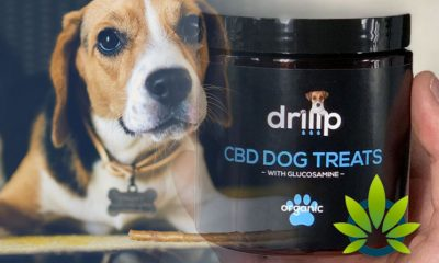 Teen Duo Launches New driiip CBD Treat Product Line for Dogs with Organic Ingredients
