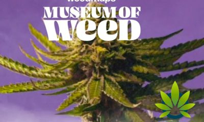 The Museum of Weed by Weedmaps is Set to Open on August 3 in Los Angeles