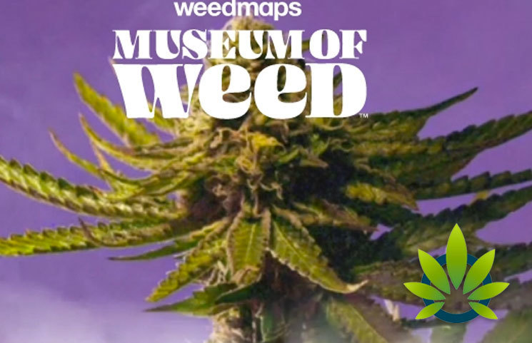 By Photo Congress || Weedmaps Legal Weed